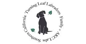 Turning Leaf Labradors
